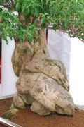 Bilder klein/Neunkirchen_2008_0189_01.JPG