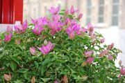 Bilder klein/Neunkirchen_2008_0082_01.JPG
